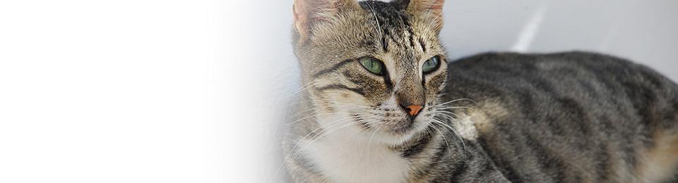slide-cat