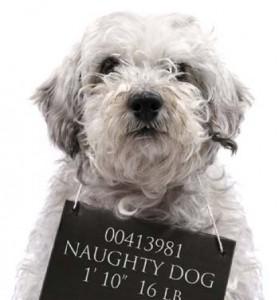 naughty-dog-279x300